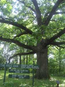Kile Oak in Irvington, IN